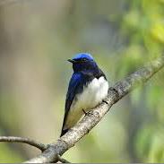 北上 民俗村 日本野鳥の会 早朝野鳥観察会に行って来た。