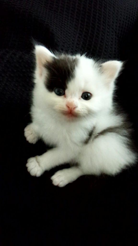 2月22日は猫の日なので、カルディ「ネコの日バッグ」!里親探し情報!!