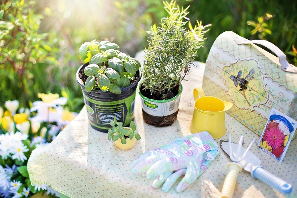介護度3 ししとうの育て方 家庭菜園初心者におすすめの野菜は?