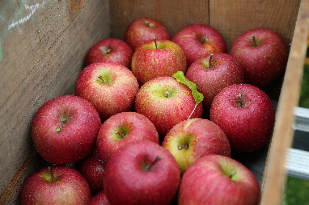 岩手・北上【ふるさと納税返礼品】 口内・金成園の美味しいりんご